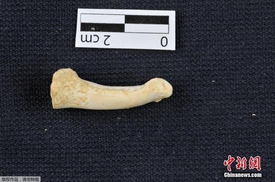 New species of ancient human found in the Philippines