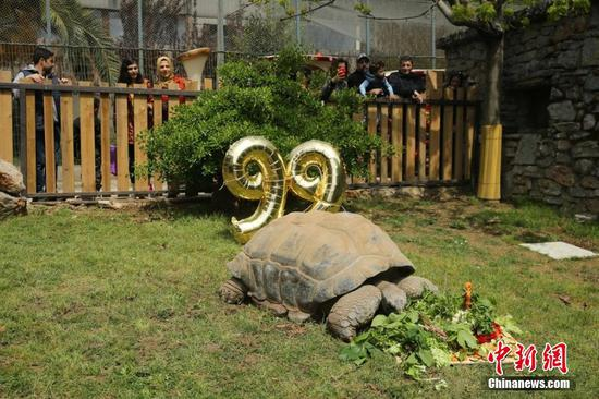 Turtle in Turkish zoo celebrates 99th birthday