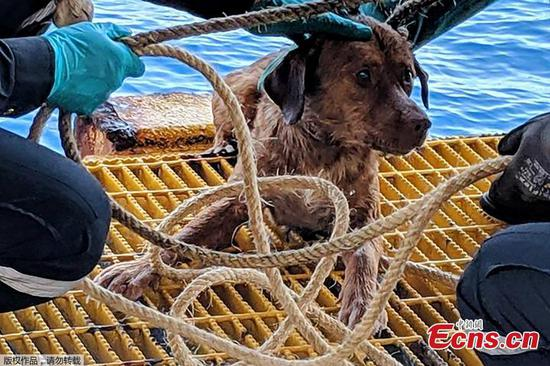 Dog rescued while swimming 220 kms off Thailand
