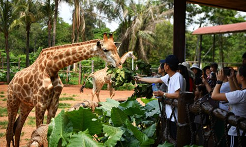 Giraffes at a zoo in South China's Hainan Province. (Photo/Xinhua)