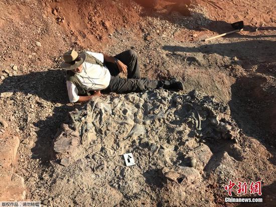 Massive 'Dinosaur Cemetery' found in Argentina