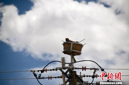 Artificial nests ensure bird safety, power supply