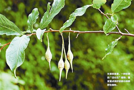 Large community of endangered plants discovered in central China
