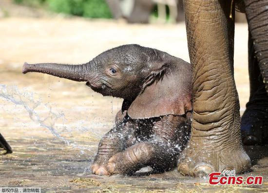 New born elephant in Wuppertal Zoo