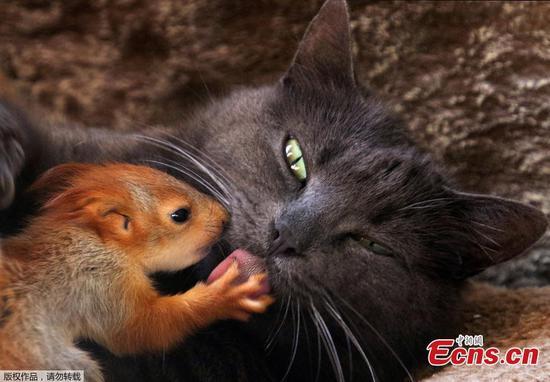 Unlikely animal friendships in Crimea