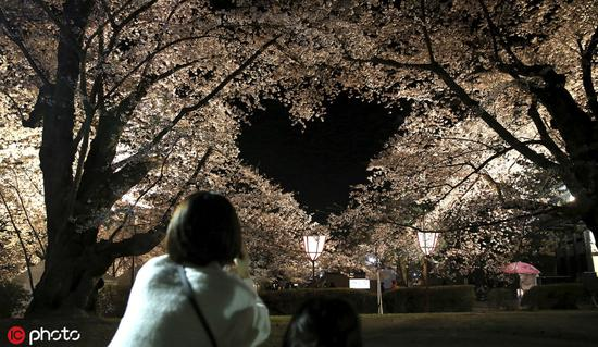 Cherry blossoms forming heart shape draw tourists to Japan park