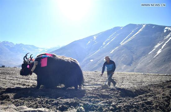 Spring plowing starts in southwest China's Tibet