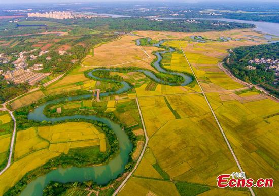 Wetland in southern Haikou to become ecology park