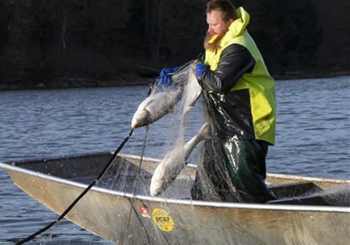 Asian carp lure Chinese investors to Kentucky