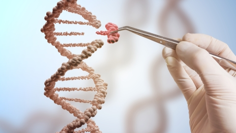 Chinese researchers develop new gene editing system