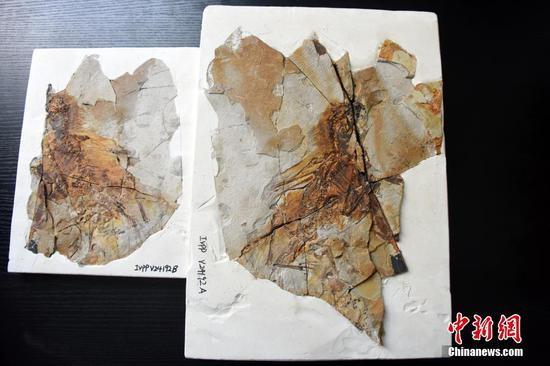 Chinese scientists discover bizarre winged dinosaur
