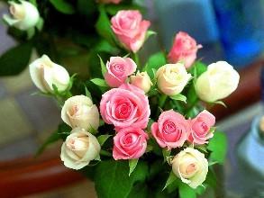 Nation's flower power in full bloom