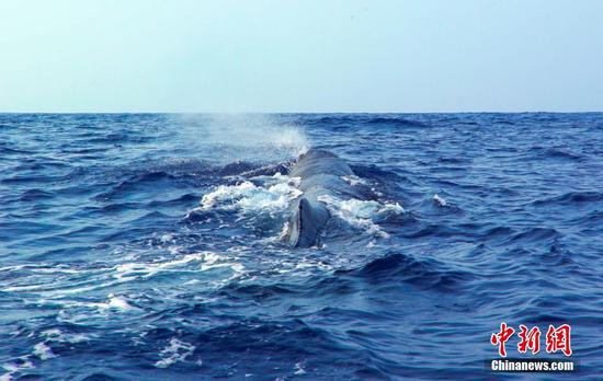 Scientists conduct the world's first investigation of whales in South China Sea