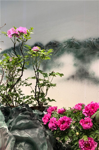 Chongqing peony wins international flower competition
