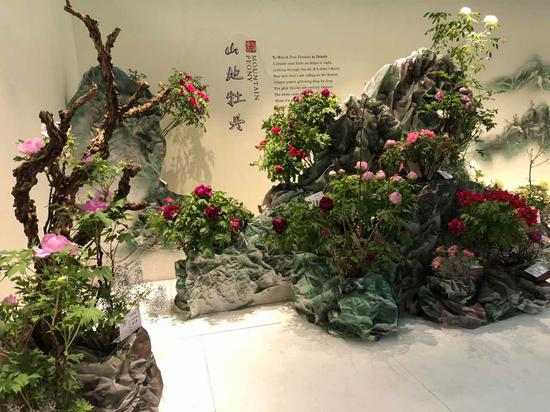 Chongqing peony wins international flower competition