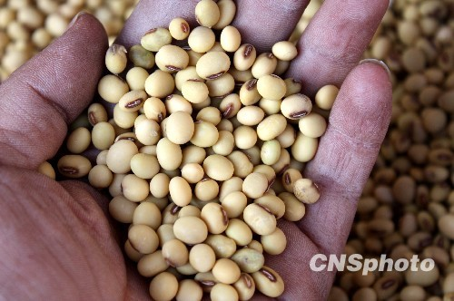 U.S. soybean futures jump over 3 pct on short-covering