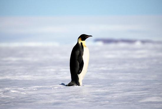 Penguin, seal waste contributes to biodiversity in Antarctica: study