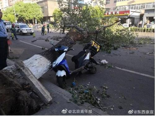 Strong wind uproots a tree which hits and kills a deliveryman in Beijing, May 19, 2019. (Photo/Beijing Youth Daily)