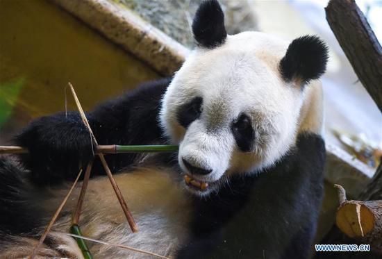 Vienna warmly welcomes giant panda from China