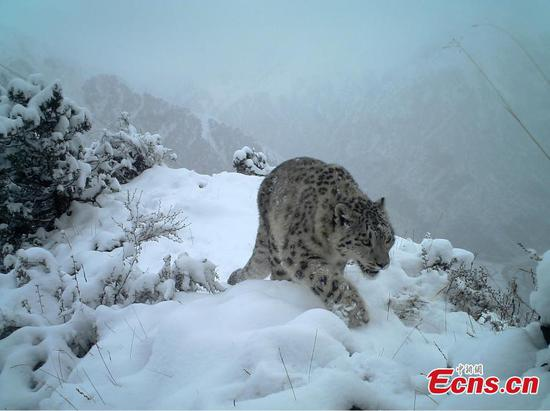 Wild animals thrive in northwest China's Qinghai