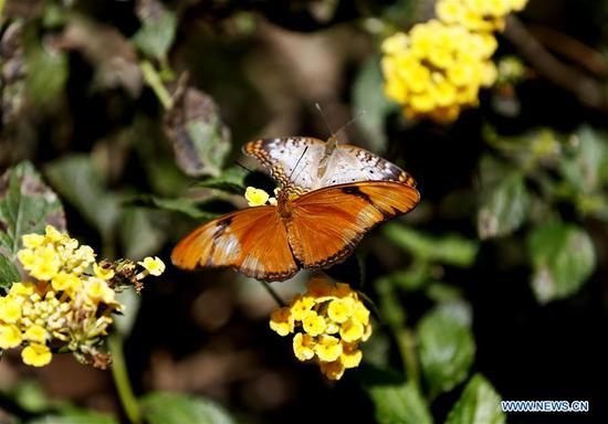 Butterfly exhibition held at Natural History Museum of Los Angeles