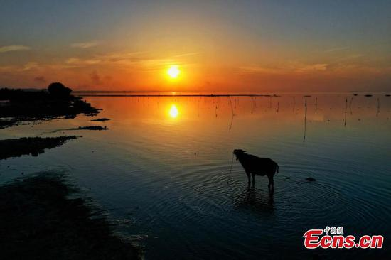 Scenery of Chaohu Lake in E China's Anhui