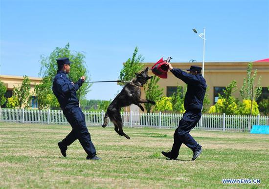 Police dogs trained in drill in Harbin, NE China