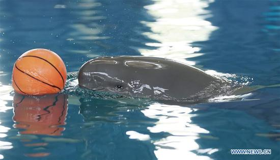 1-year-old finless porpoise celebrates birthday in Wuhan