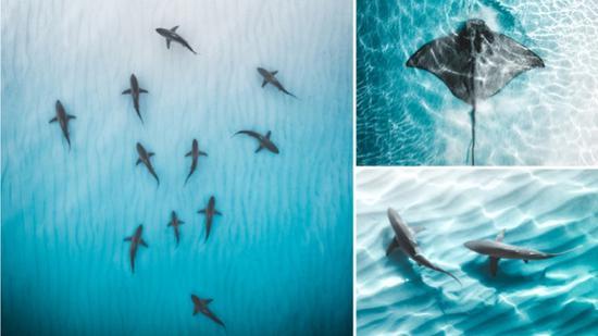 令人惊叹的照片在透明的水中捕获了巨大的黄貂鱼和鲨鱼