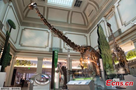 Smithsonian's National Museum of Natural History to reopen dinosaur and fossil hall
