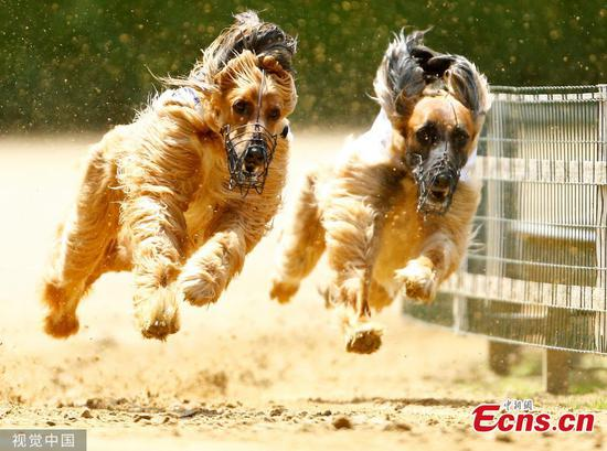 In pics: International Dog Race in Gelsenkirchen
