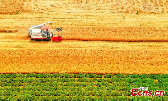 Wheat harvest season in eastern Anhui province