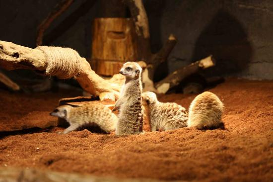 Shopping mall in Shanghai gets its own zoo