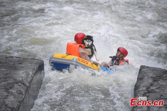Rafting contest for dog and owner together