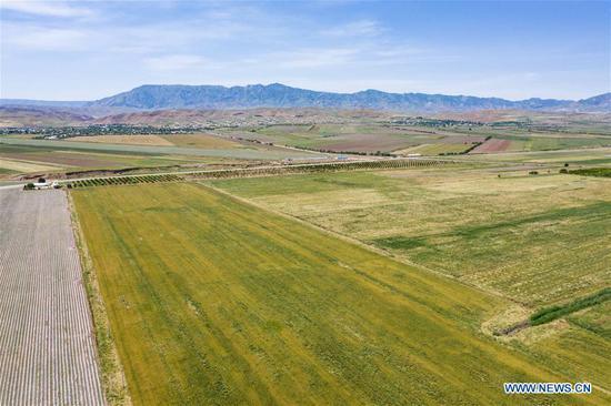 Aerial photo taken on May 21, 2019 shows a cotton field in Dangara, Tajikistan. (Xinhua/Zhang Ruoxuan)