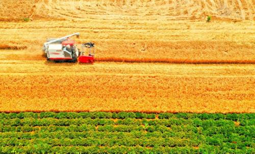 Wheat harvest season in eastern Anhui province