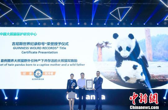 A pair of pandas receive a certificate from the Guinness World Records in Beijing, June 12, 2019. (Photo provided to China News Service)