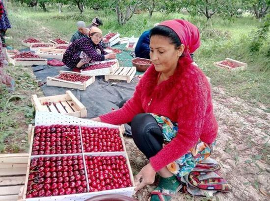Cherries from Central Asia well received in China