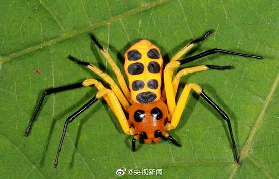 Chinese scientist discovers new spider species