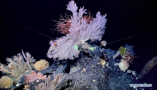 China's research vessel collects about 250 species during Western Pacific expedition