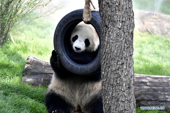 熊猫屋在中国青海西宁向公众开放