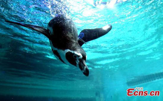 广州水族馆的野生动物世界