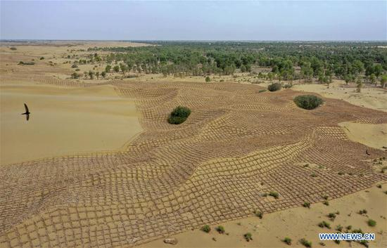 Checkerboard sand barriers help curb desertification in Xinjiang