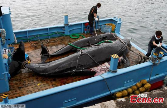 Japan set to resume commercial whaling next week after 32-year break