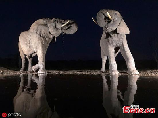 Stunning photos show safari animals lit up in night sky