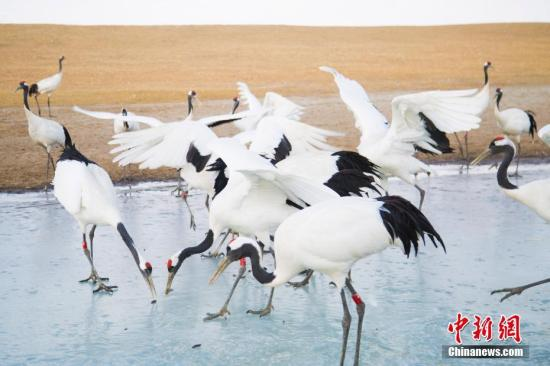 Wetland protection bears fruits in northernmost province