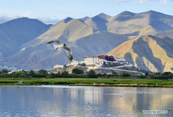 Lhalu wetland, 'the Lung of Lhasa' in China's Tibet