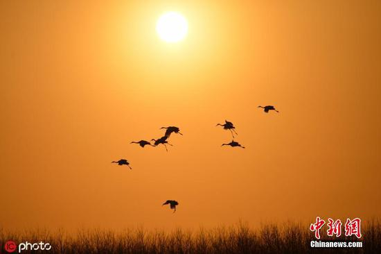 Birds fly over the sky of a wetland in Yancheng, Jiangsu Province. (File photo/IC)