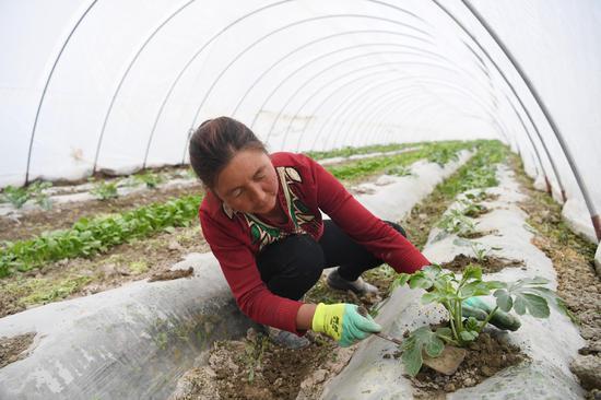 Greenhouses take root in desert land