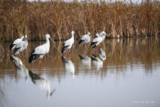 China's migratory bird sanctuaries added to UNESCO World Heritage List